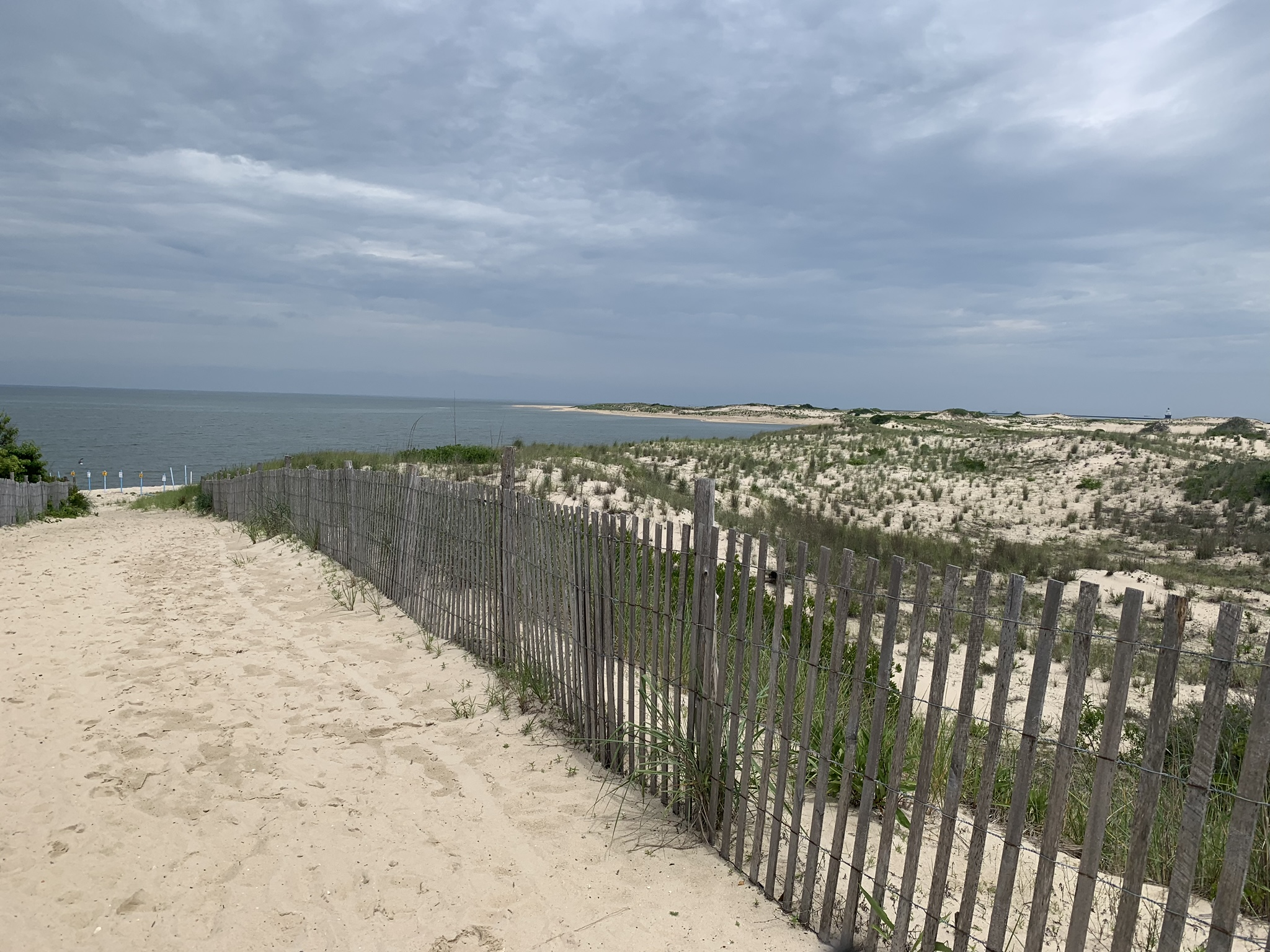 View of the Delaware Bay within Cape Henlopen State Park. This is along the bike trail.