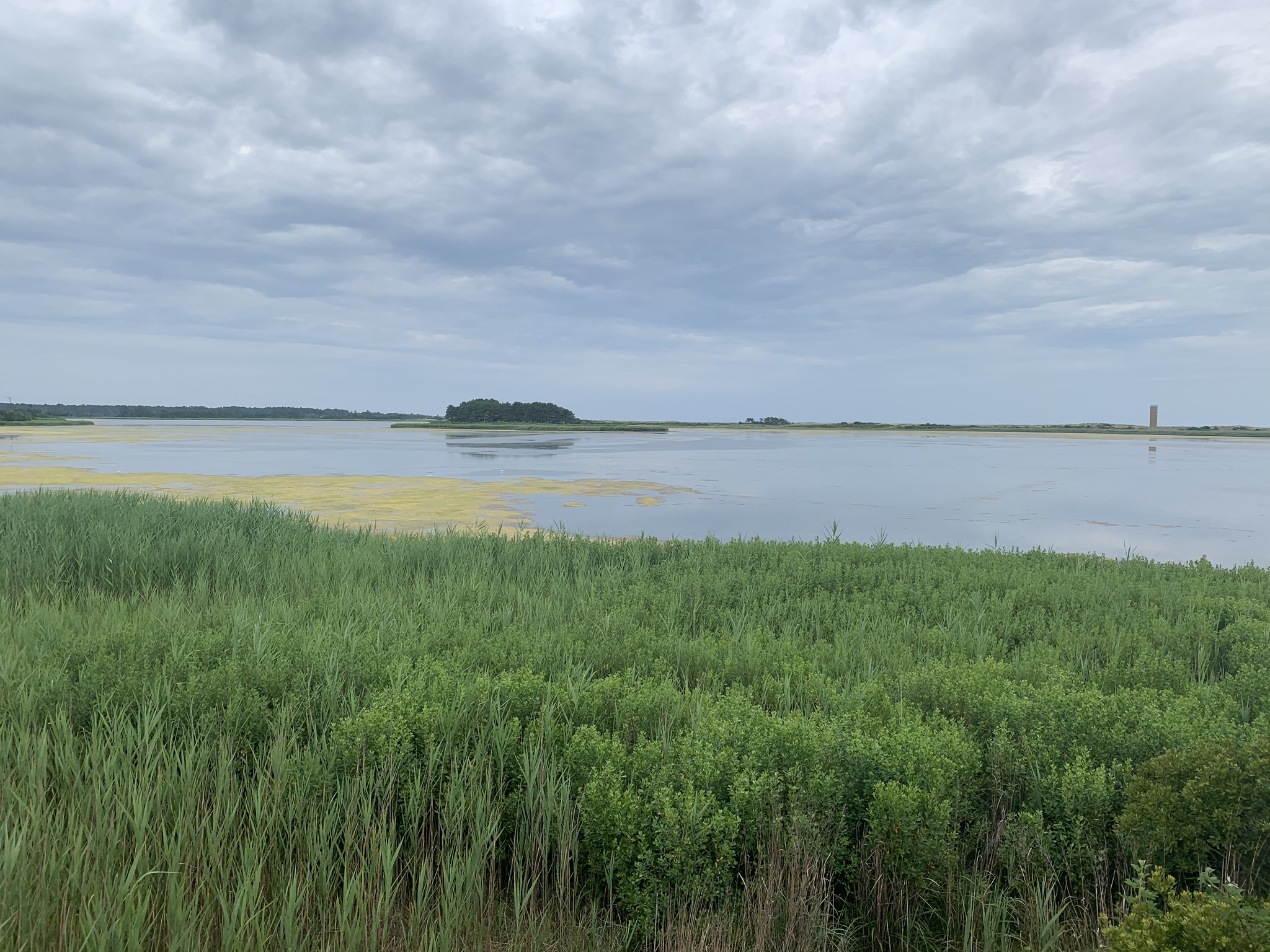 Mostly cloudy skies along the Cape Henlopen bike trail in Delaware.