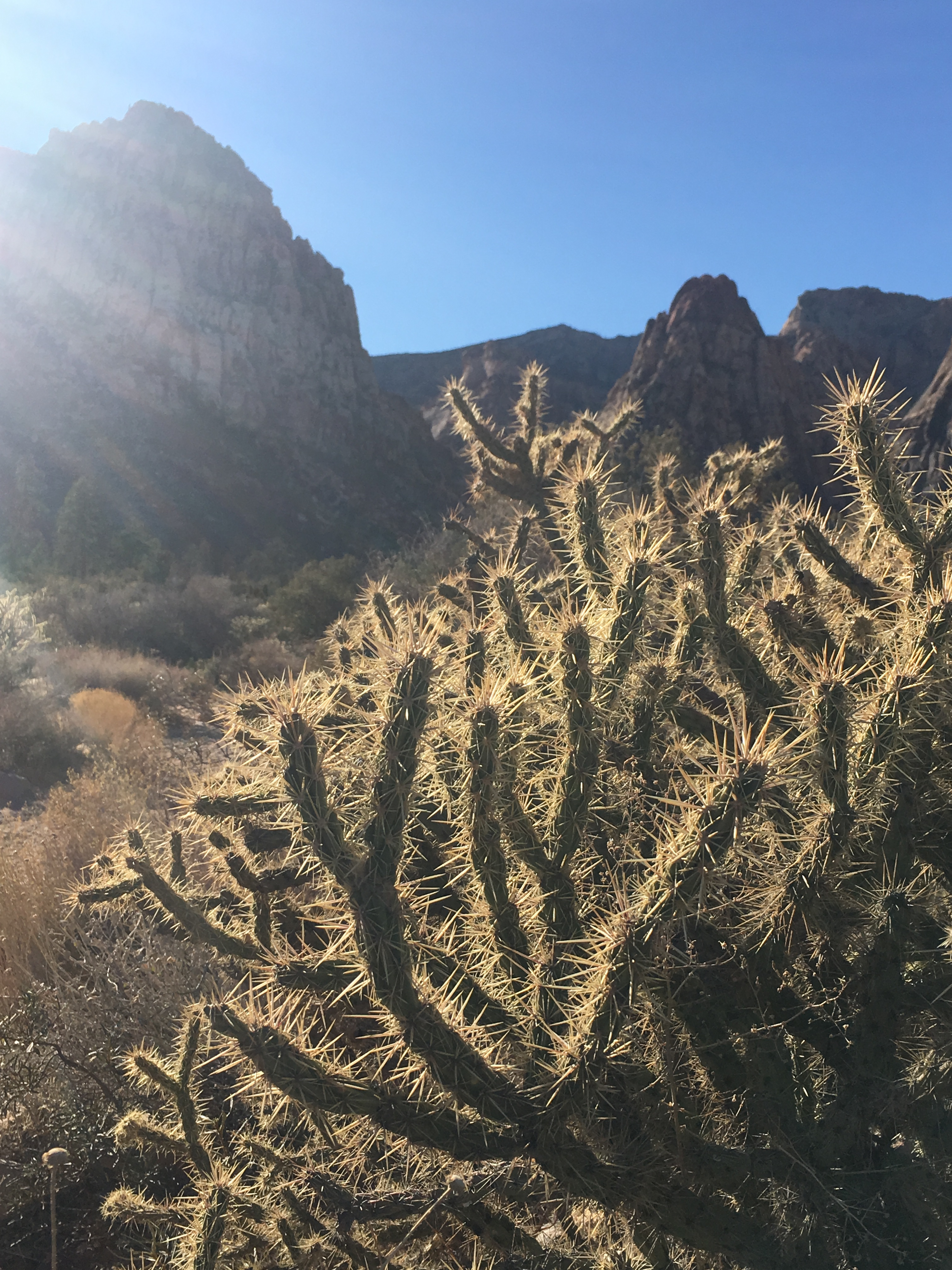 Cactus along the trail at Red Rock Canyon.